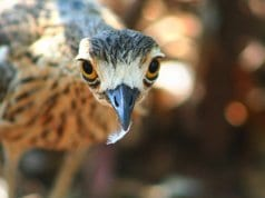 Curlew Selfie!Photo by: Stephen Michael Barnett//creativecommons.org/licenses/by/2.0/