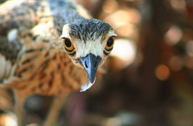 Curlew Selfie!Photo by: Stephen Michael Barnetthttps://creativecommons.org/licenses/by/2.0/