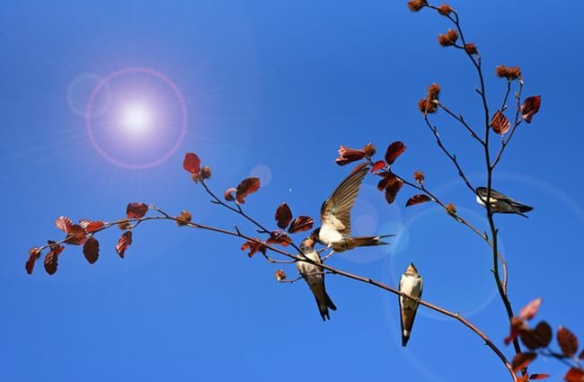 Swallows on a branch Photo by: Mabel Amber, still incognito..., public domain https://pixabay.com/photos/swallow-bird-animal-feeding-3956368/