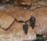 Great Dusky Swifts, Roosting Behind A Waterfall In Brazilphoto By: Donald Hobern//creativecommons.org/licenses/by/2.0/