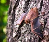 A Bat Perched On A Tree Trunk Photo By: Cindy Parks //pixabay.com/photos/bat-Mammal-Wildlife-Spooky-Wing-1695186/