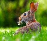 Portrait Of A Pretty Pet Bunny Rabbitphoto By: David Markhttps://pixabay.com/photos/rabbit-Hare-Animal-Cute-Adorable-1903016/