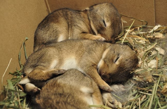 Baby bunnies sleeping Photo by: Jannes Pockele https://creativecommons.org/licenses/by/2.0/