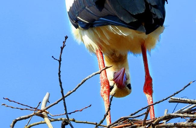 Peek-a-Boo! This silly Stork is watching you! Photo by: satynek //pixabay.com/photos/stork-bird-socket-spring-4098979/