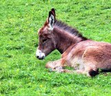 Donkey Foal Snoozing In The Sun Photo By: Manfred Antranias Zimmer Https://Pixabay.com/Photos/Donkey-Donkey-Foal-Foal-Baby-409165/