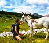 Donkeys Are Friendly Creatures By Nature Photo By: Annabiasoli Https://Pixabay.com/Photos/Donkey-Human-Mule-Companions-4350889/
