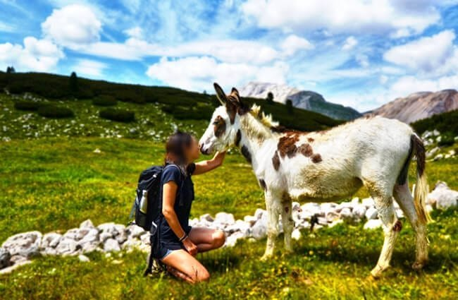 Donkeys are friendly creatures by nature Photo by: annabiasoli https://pixabay.com/photos/donkey-human-mule-companions-4350889/