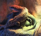 A Knot Of Savannah Monitor Lizards In An Aquarium Photo By: Bjoertvedt Cc By-Sa 4.0 Https://Creativecommons.org/Licenses/By-Sa/4.0