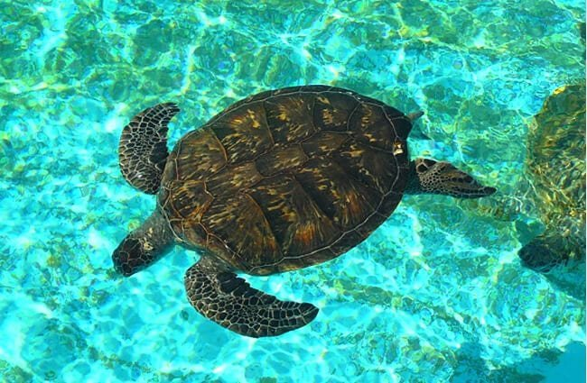 Sea Turtle in clear waters Photo by: SteFou! https://creativecommons.org/licenses/by-sa/2.0/