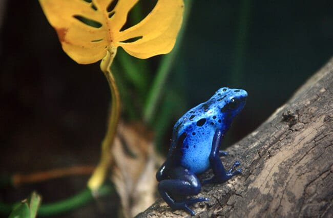 a critically endangered species being successfully bred at the Bristol Zoo Photo by: Charlie Marshall https://creativecommons.org/licenses/by/2.0/