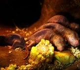 Naked Mole Rats Underground Photo By: Cheryl Https://Creativecommons.org/Licenses/By-Nd/2.0/