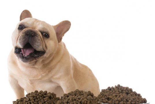 dog food by: Fotosearch.com
