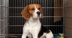 Best indestructible dog crate by: fotosearch.com