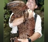 Chinese Giant Salamanderphoto By: James Joelhttps://creativecommons.org/licenses/by-Nc/2.0/