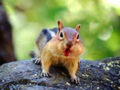 Go WILD for a while — be a Chipmunk, baby!Photo by: Ninahttps://creativecommons.org/licenses/by/2.0/
