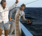 Conger Eel Caught Near Cosgrove Off Key West Photo By: Florida Keys--Public Libraries Https://Creativecommons.org/Licenses/By-Sa/2.0/