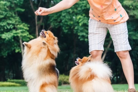dog with treat by: Fotosearch.com