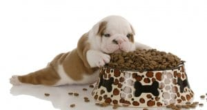 Puppy food by: fotosearch.com