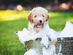 dog bath by: Fotosearch.com