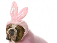 Dog costume by: Fotosearch.com