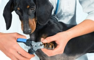 Dog nail clipper by: Fotosearch.com