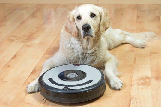 dog with vacuum by:fotosearch.com