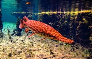 Florida GarPhoto by: Phil's 1stPixhttps://creativecommons.org/licenses/by-nc-sa/2.0/