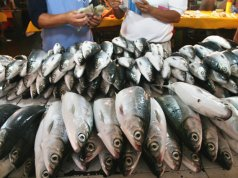 Fresh catch MilkfishPhoto by: Keith Bacongcohttps://creativecommons.org/licenses/by/2.0/