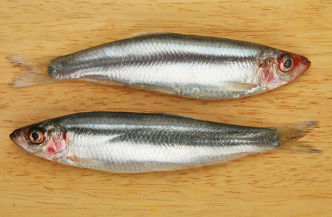 Two Sprat fish on a wooden board Photo by: (c) Griffin024 www.fotosearch.com