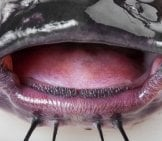Ultra Closeup Of A Channel Catfish Mouth Photo By: (C) Photozi Www.fotosearch.com