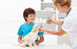 dog dewormer by: Fotosearch.com