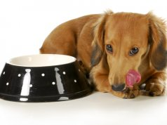 small dog food by: Fotosearch.com