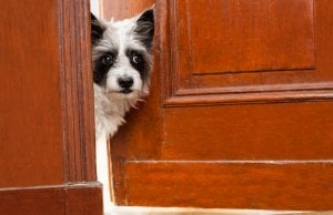 dog looking out door by:Fotosearch.com