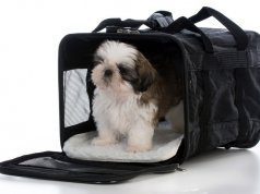dog crate by: Fotosearch.com