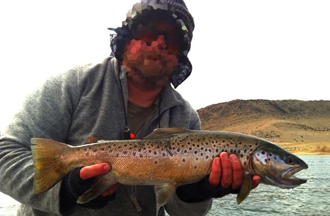 BLM fisheries biologist with a Brown Trout Photo by: BLMIdaho https://creativecommons.org/licenses/by/2.0/