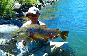 32-inch Brown Trout caught in the Truckee River, NevadaPhoto by: Chad Mellison, U.S. Department of the Interiorhttps://creativecommons.org/licenses/by/2.0/