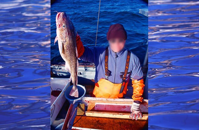 Fisherman showing off his catch, cod Photo by: David Csepp, NMFS/AKFSC/ABL [Public domain]