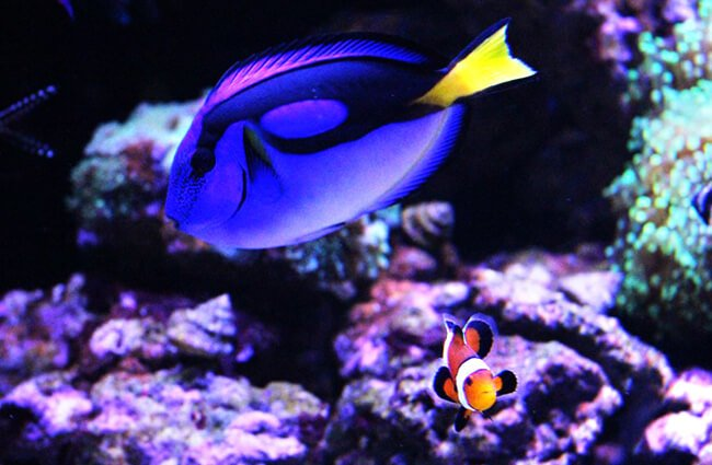 Dory fish and an orange Clownfish Photo by: Paultons Park Home of Peppa Pig World https://creativecommons.org/licenses/by-sa/2.0/