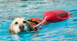 dog life jacket by: Fotosearch.com