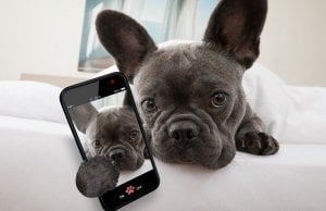 dog camera by: Fotosearch.com