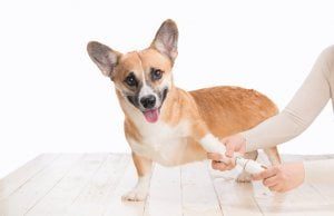 dog nail grinder by: Fotosearch.com