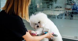 dog brush by: fotosearch.com