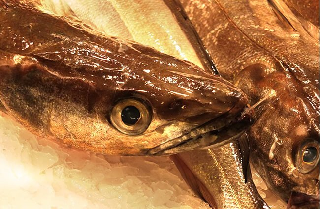 Hake sold at a fish stall in Barcelona Photo by: Ad Meskens CC BY-SA https://creativecommons.org/licenses/by-sa/4.0