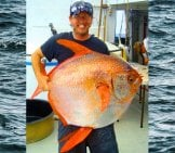 Fisherman Showing Off His Large Catch – A Moon Fish Photo By: Unknown (Noaa Fisheries) [Public Domain]