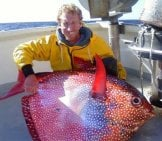 Large Moon Fish Caught In The U.s. Photo By: David H. Cc By Https://Creativecommons.org/Licenses/By/3.0