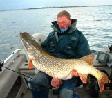 "This 54"" Pike Was Caught At Rainy River Photo By: Tom Jervis Https://creativecommons.org/licenses/by/2.0/"