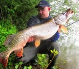 A Large, Fresh Caught Pike Photo By: Spinfishercro Cc By-Sa Https://creativecommons.org/licenses/by-Sa/4.0