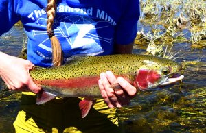 Rainbow Trout at Seedskadee National Wildlife RefugePhoto by: USFWS Mountain-Prairiehttps://creativecommons.org/licenses/by/2.0/
