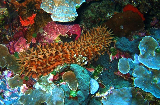 Sea Cucumber on the colorful ocean floor Photo by: Stephen Masters https://creativecommons.org/licenses/by-sa/2.0/