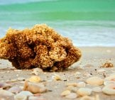 Sea Sponge On The Beach Photo By: (C) Sorsillo Www.fotosearch.com